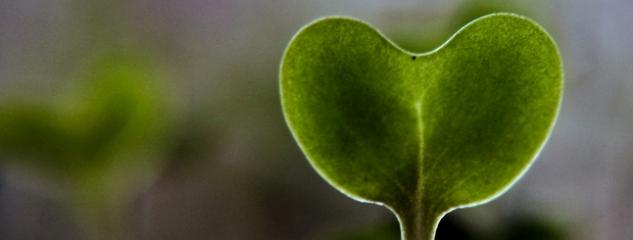 broccolikiem