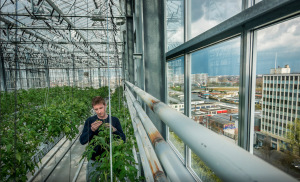 Artikel AD Westland - Urban farmers - Koppert Cress - Rob Baan