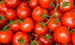vers+ - tomaten