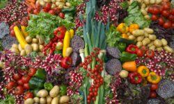 Groenten - Koppert Cress